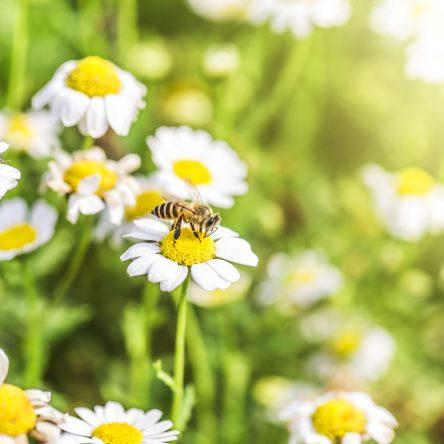Co to jest miód nektarowy i czym różni się od innych rodzajów miodu?
