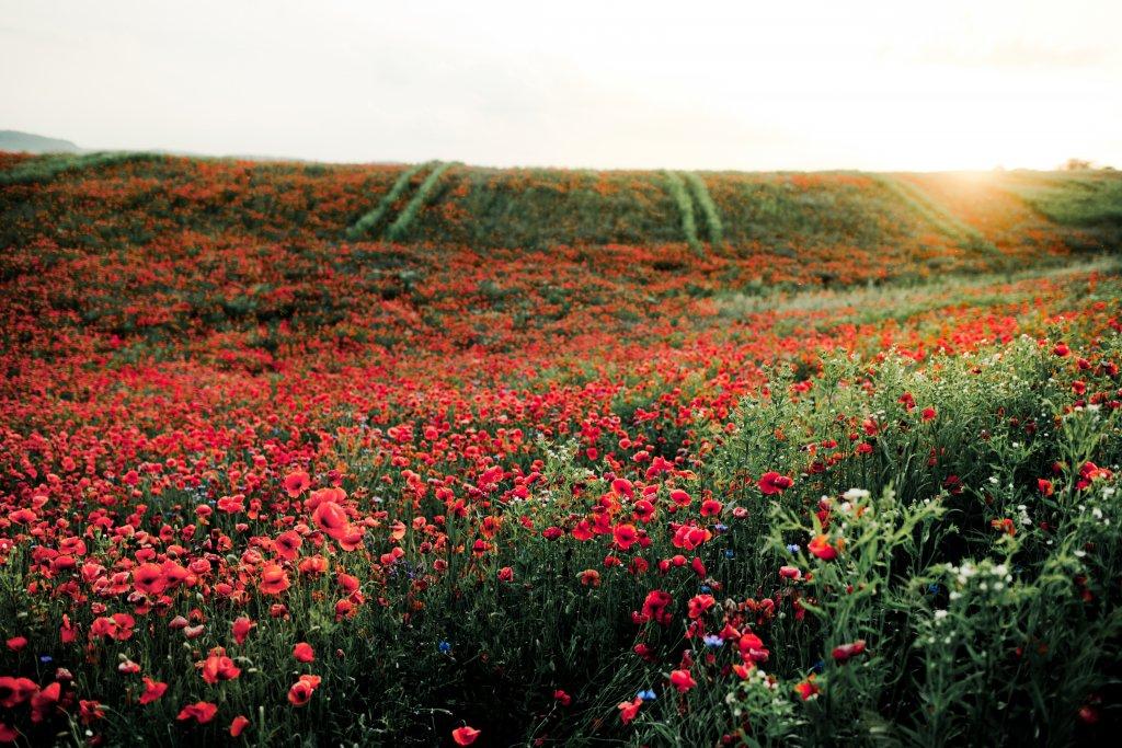 Miód wielokwiatowy - z jakich kwiatów powstaje